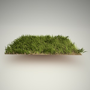 Grass2 Free 3d Model